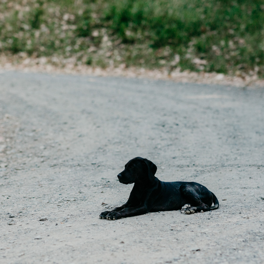 Dog at Sunrise Mountain Farms