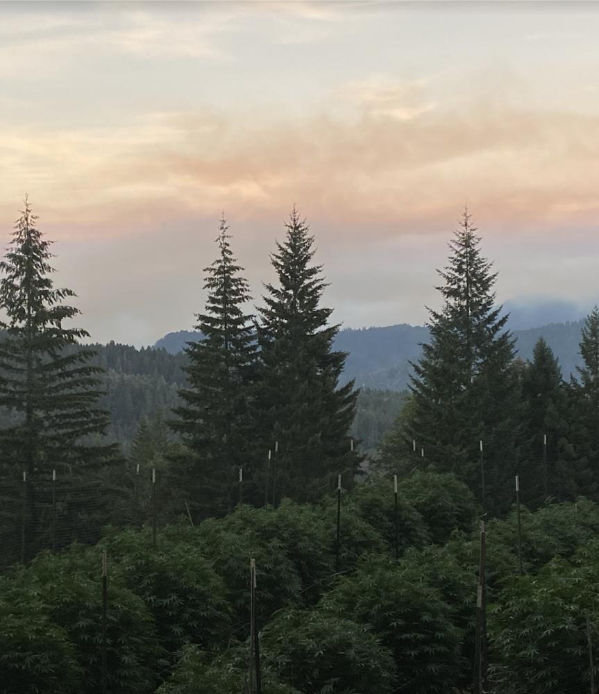 Sunrise Mountain farms