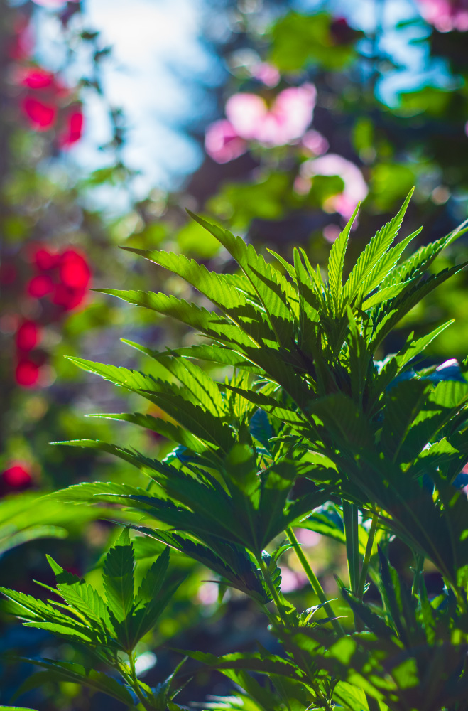 regenerative-farming